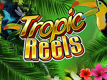 Игровые автоматы Tropic Reels виртуальный игровой автомат с мультиспинами на деньги